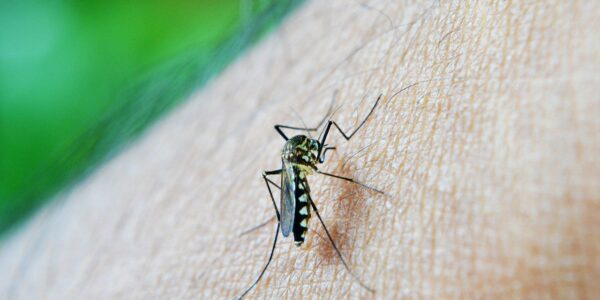 Do Certain Scents Attract Mosquitoes